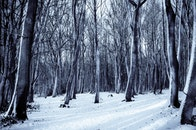 cold, snow, nature