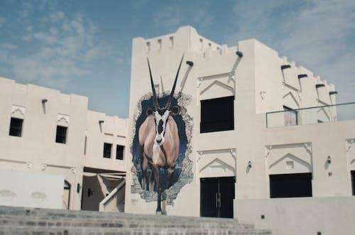 Ảnh lưu trữ miễn phí về pexels-thaerphotographie-katara-qatar-zeichnung