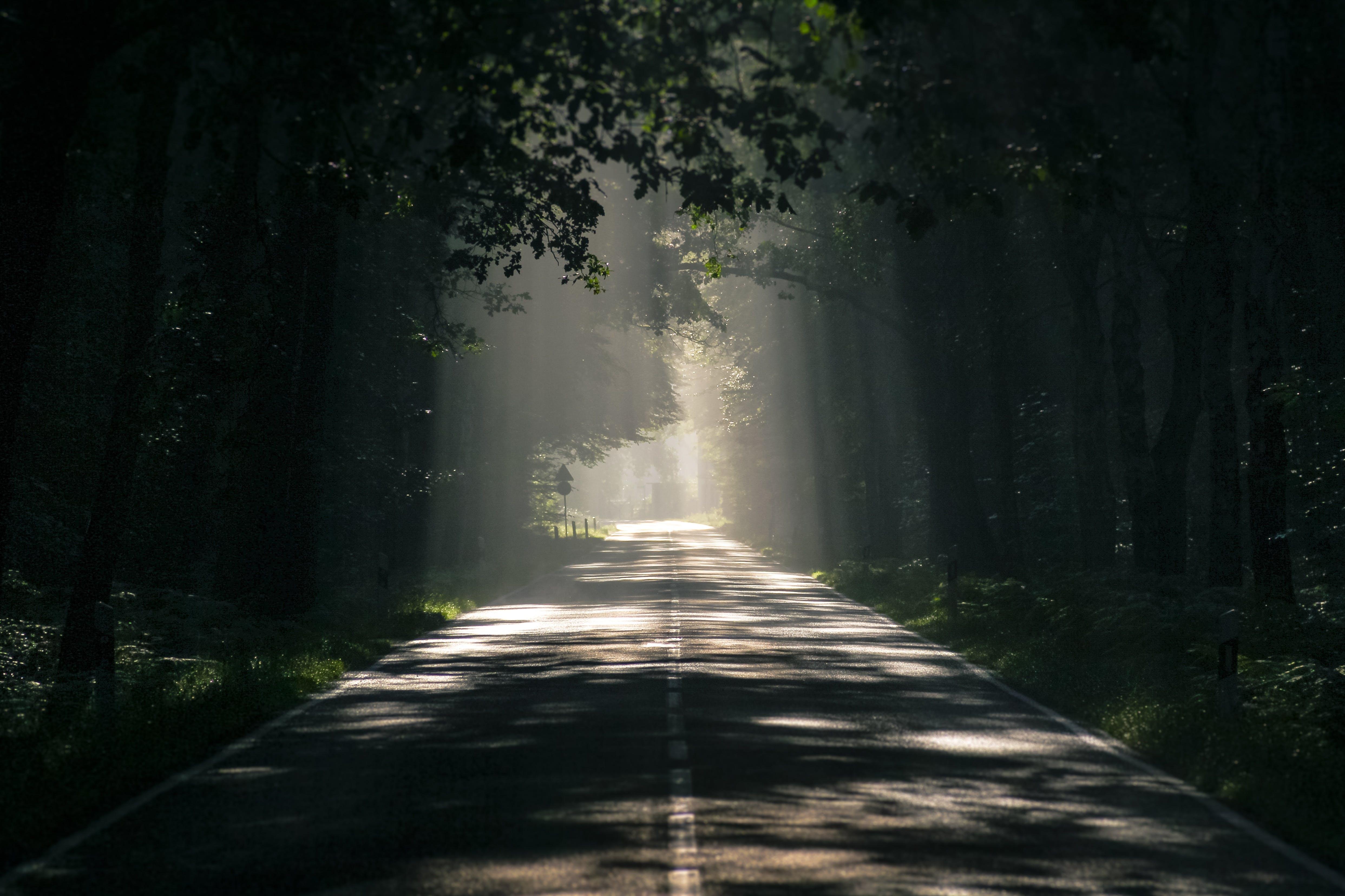 Kostenloses Stock Foto zu asphalt, bäume, beratung, dämmerung