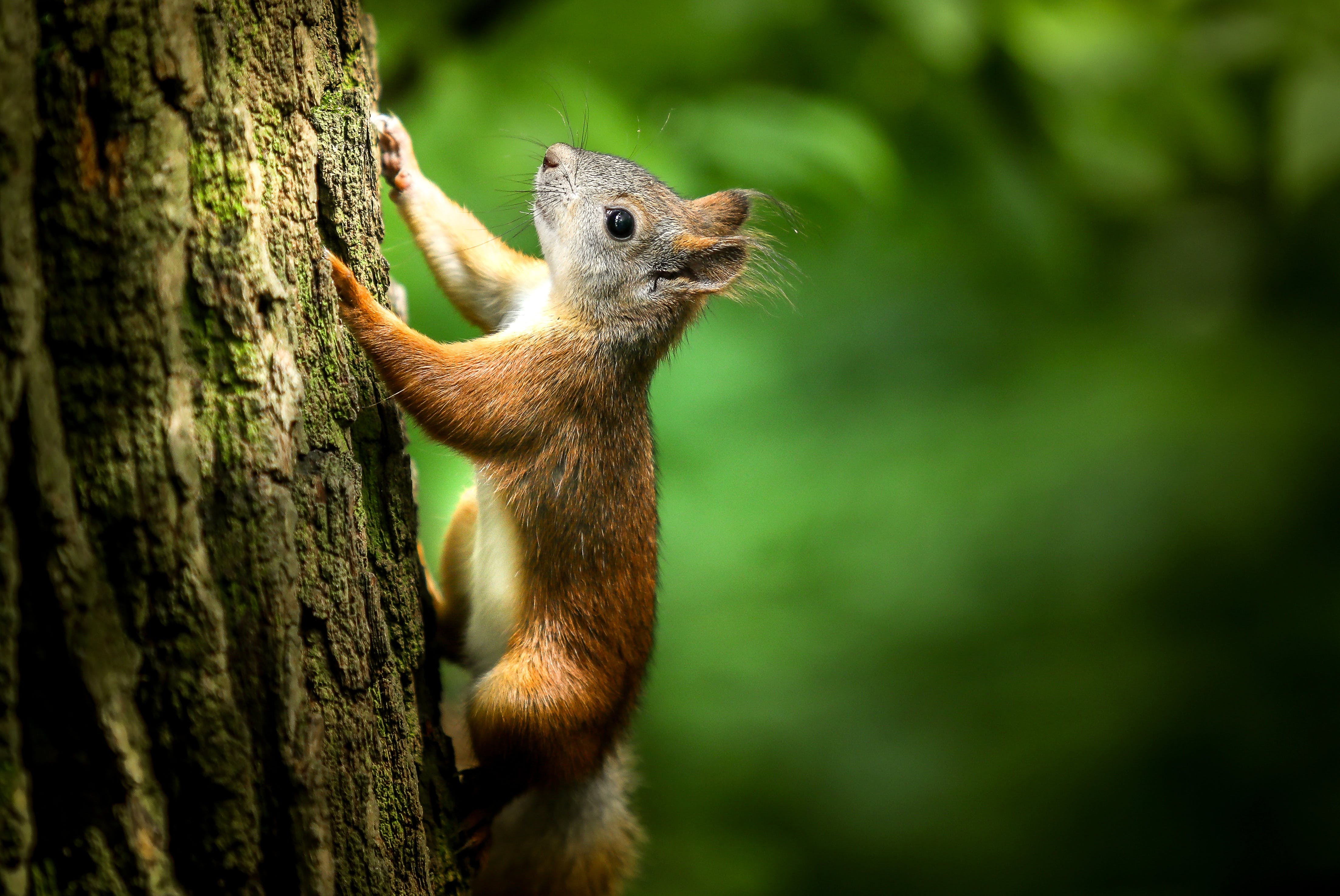 Close Up Photography of Squirrel Climbing Tree