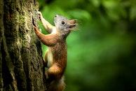 animal, cute, tree