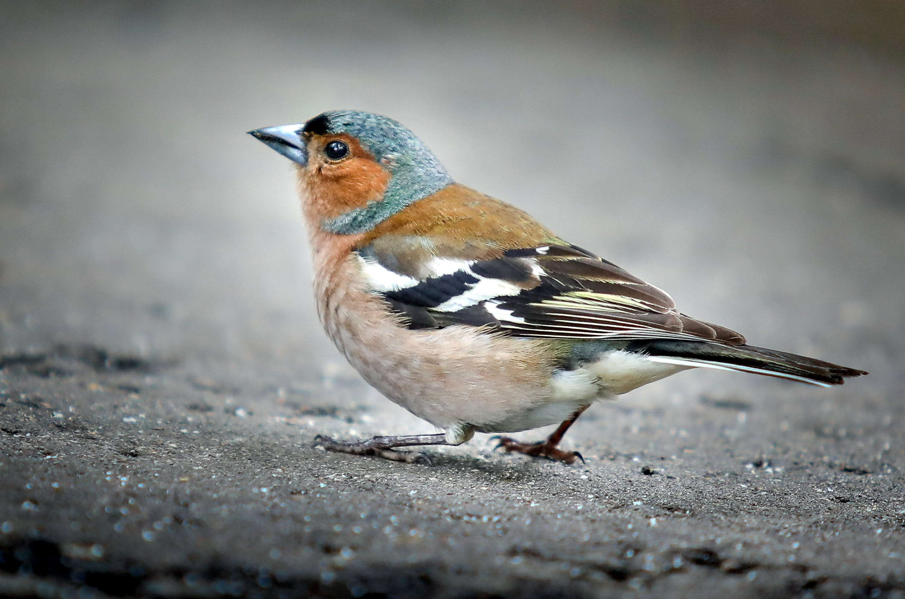 Free stock photo of nature, bird, park, sparrow