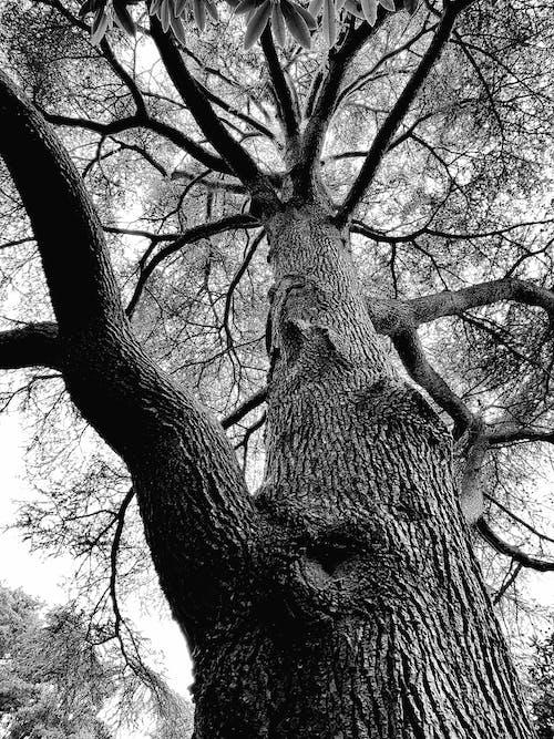 Základová fotografie zdarma na téma černobílý, kmen stromu, kůra, perspektiva