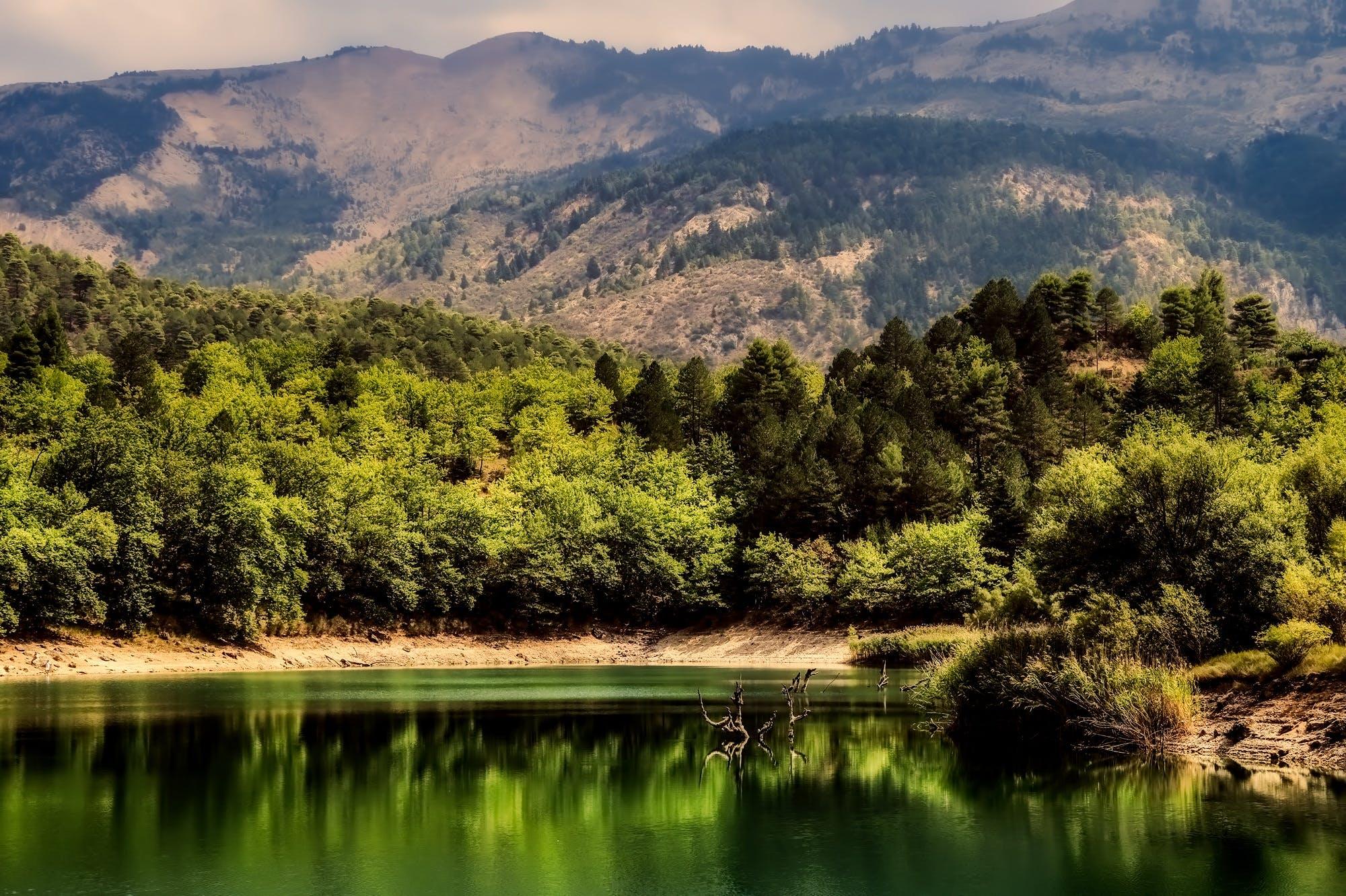 Základová fotografie zdarma na téma denní světlo, dřevo, hory, kopec
