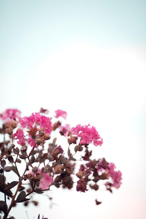 Ảnh lưu trữ miễn phí về bánh quy, bầu trời, cánh hoa, chi nhánh