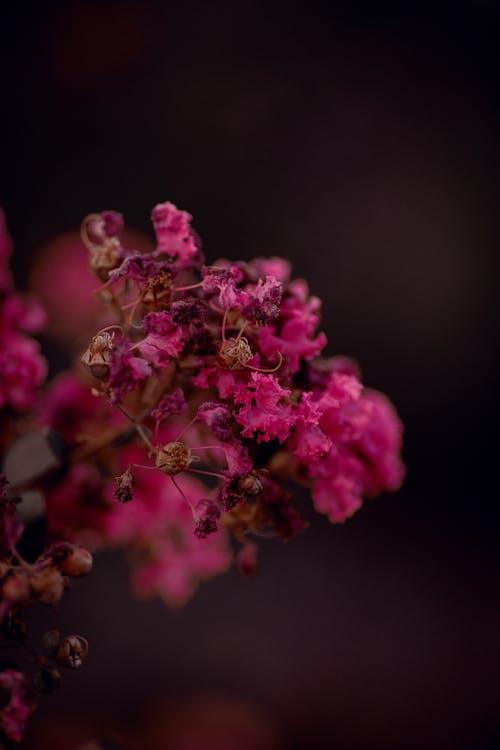 Ảnh lưu trữ miễn phí về bánh quy, bầu trời, cánh hoa, cuộc sống tĩnh lặng