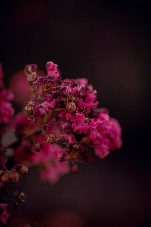 Photos gratuites de amour, arbre, brillant