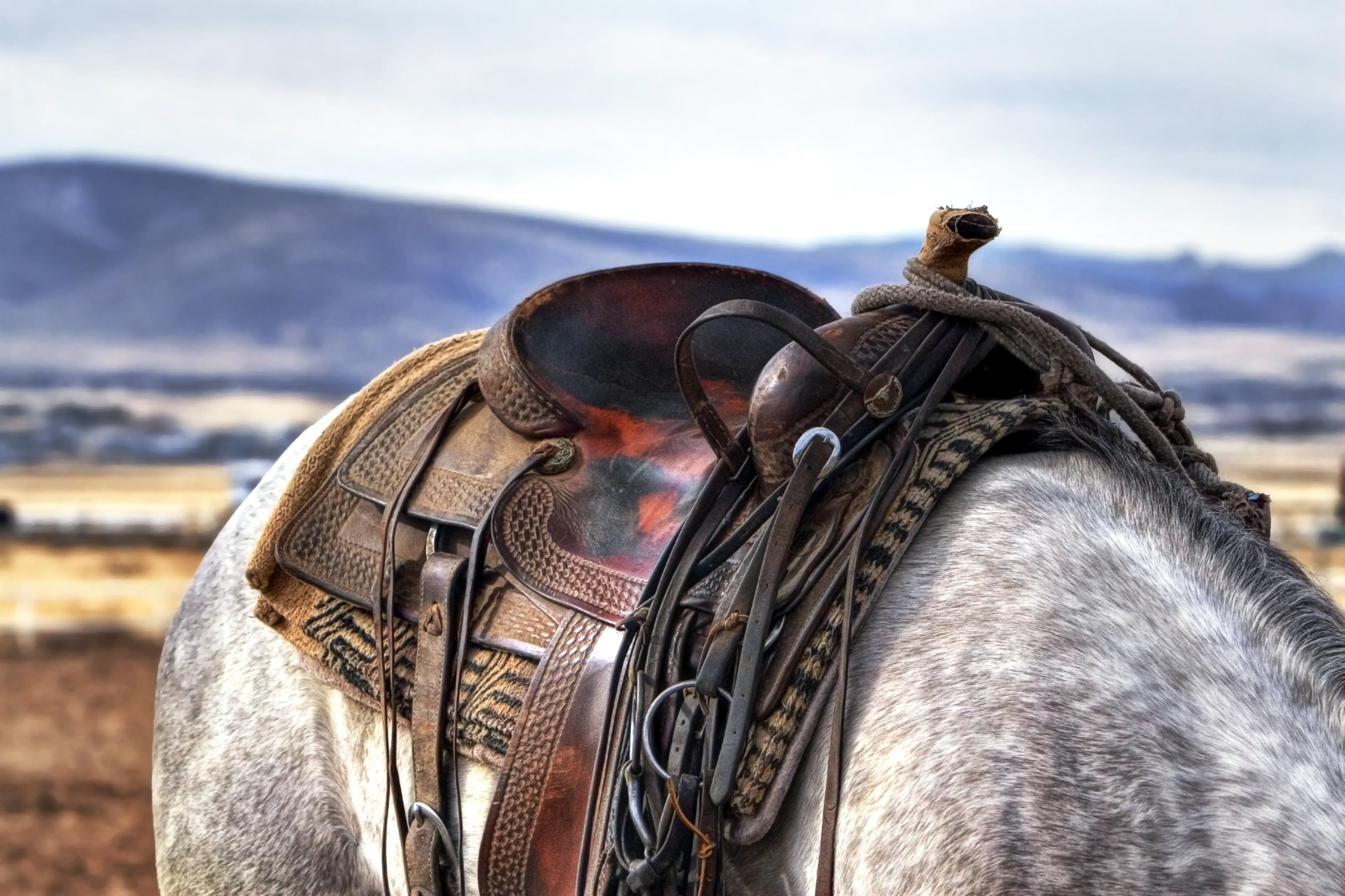 Brown and Black Leather Horse Saddle on White and Gray Animal