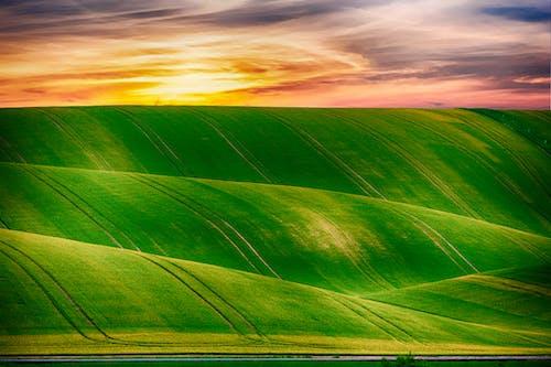 Foto d'estoc gratuïta de alba, camp d'herba, cel, idíl·lic