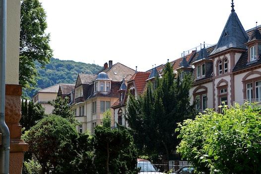 Free stock photo of city, street, buildings, trees