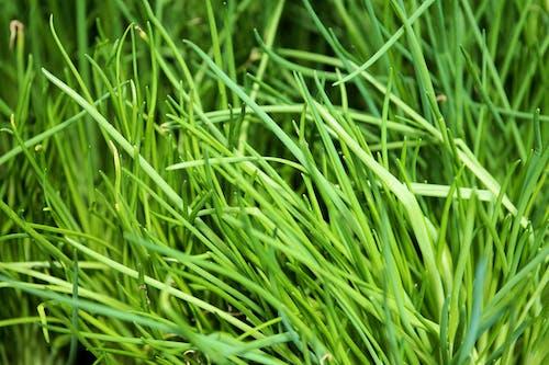 Foto d'estoc gratuïta de aroma, creixement, desenfocament, gespa