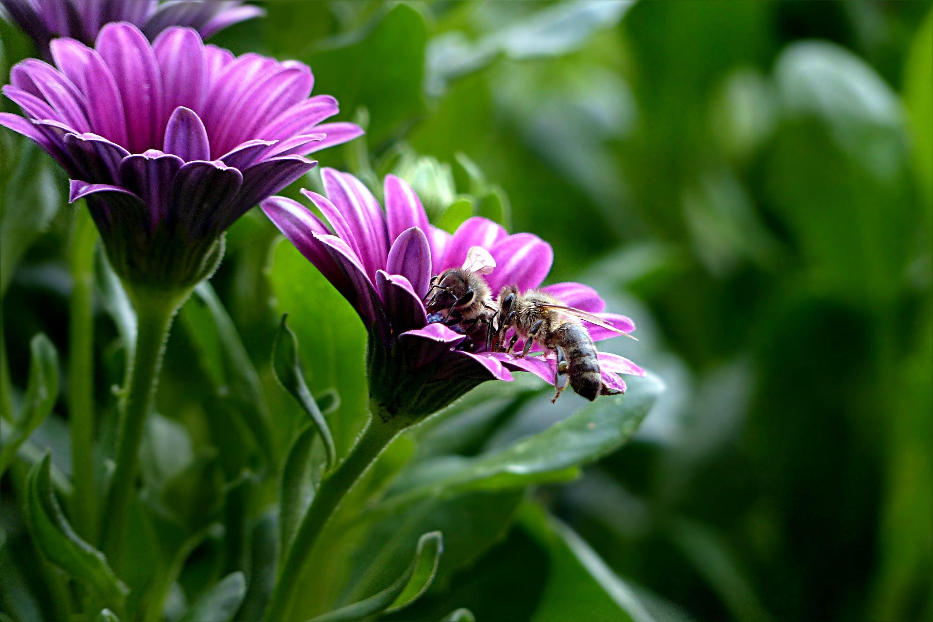 Darmowe zdjęcie z galerii z bornholm marguerite, flora, kwiaty, kwitnąć