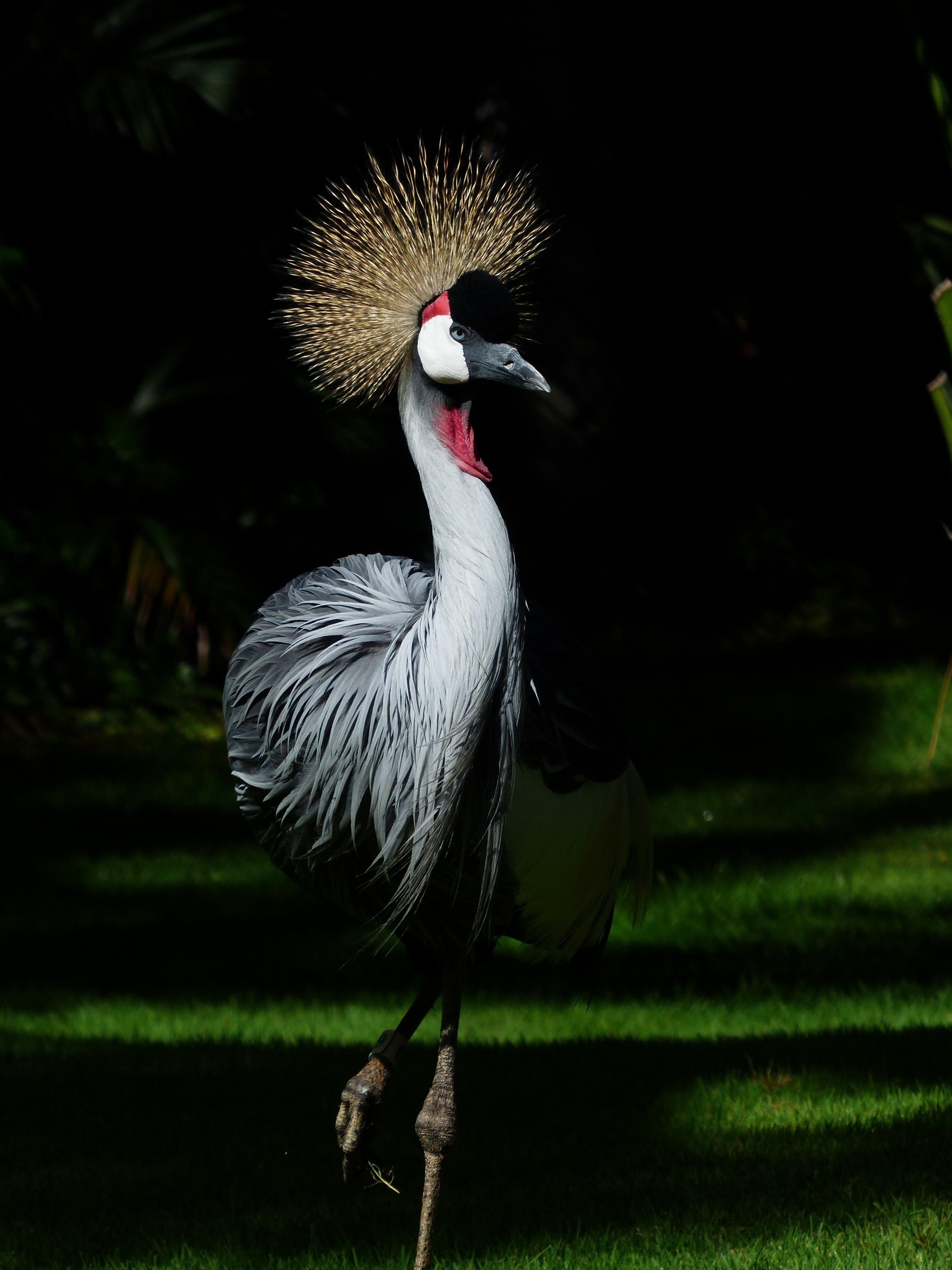 Free stock photo of bird, animal, grass, park