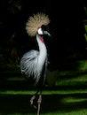 bird, animal, grass