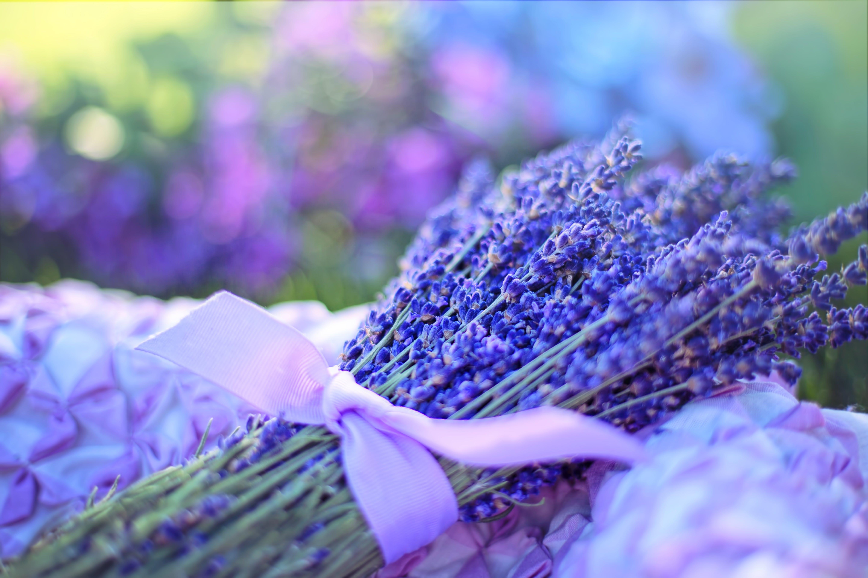 Gratis lagerfoto af aroma, aromatisk, blomster, dybde