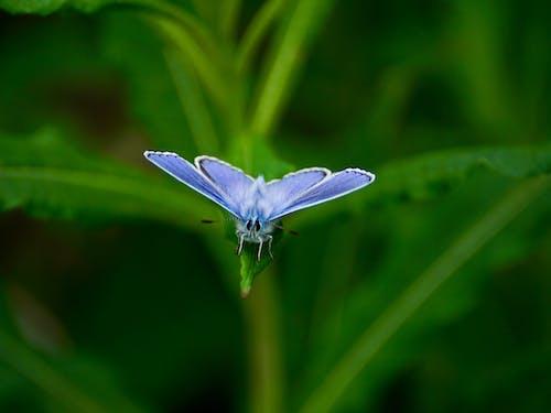 Purple Moth on Green Leaf