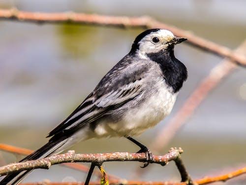 Imagine de stoc gratuită din animal, aripi, estompare, faună sălbatică