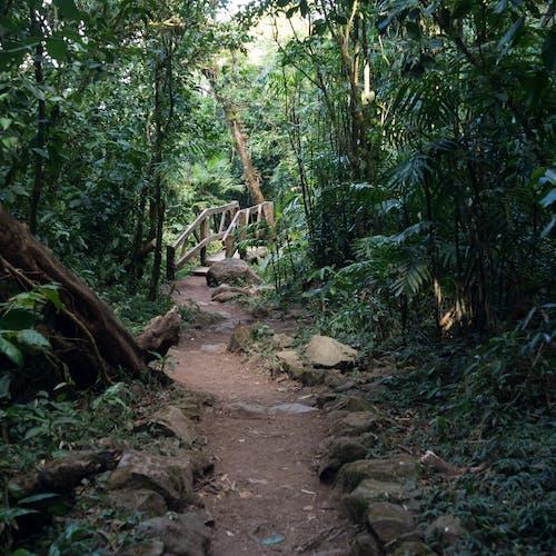 Foto stok gratis hutan, jalur, mombacho