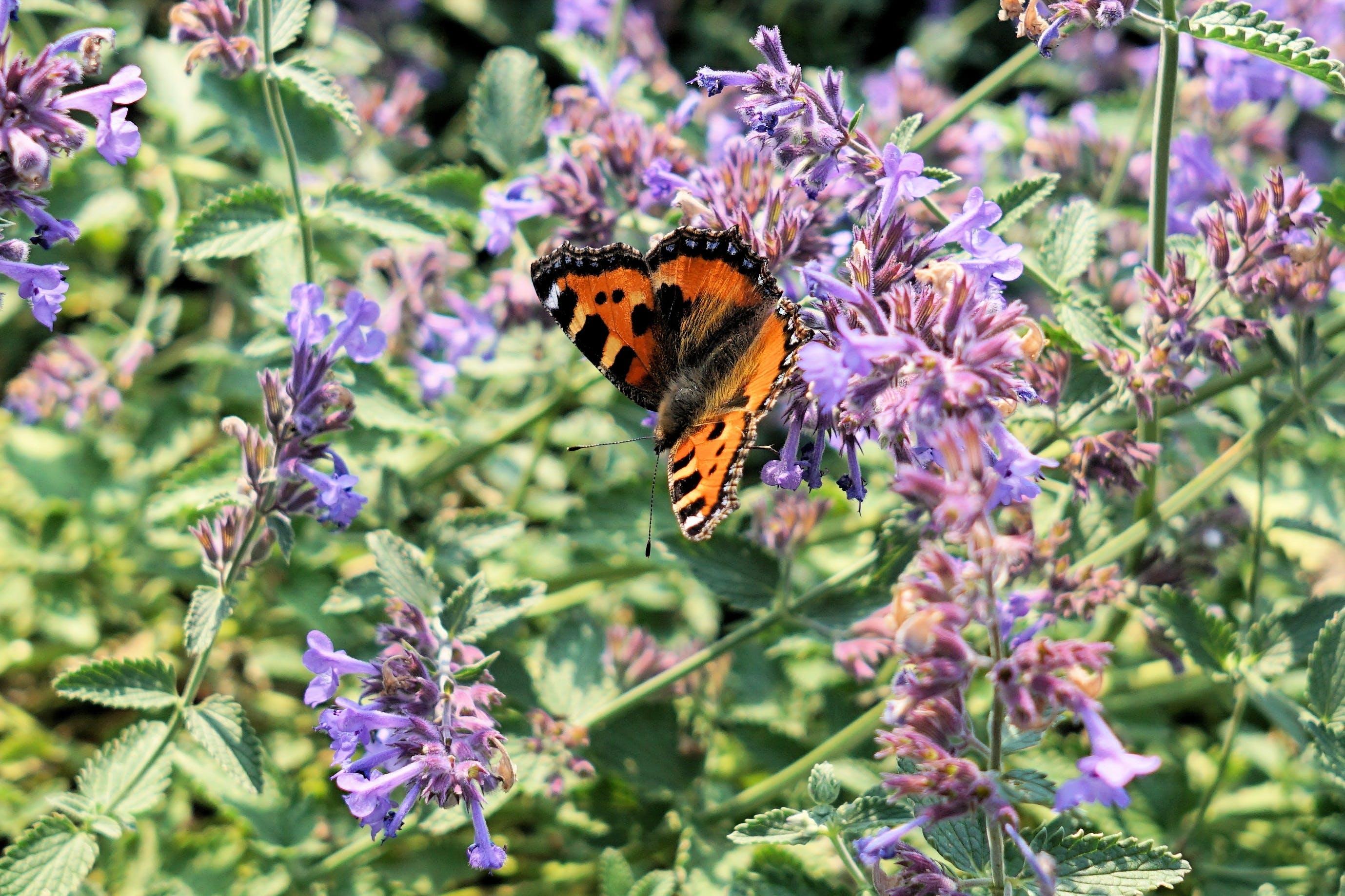 blur, butterfly, close-up