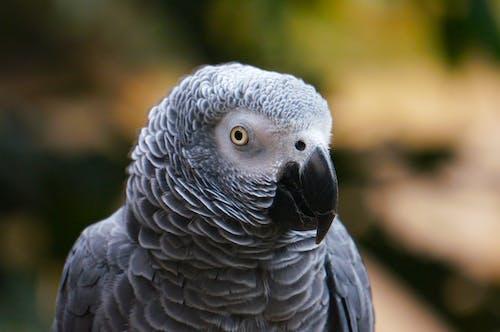 Kostenloses Stock Foto zu federn, gefieder, niedlich, papagei