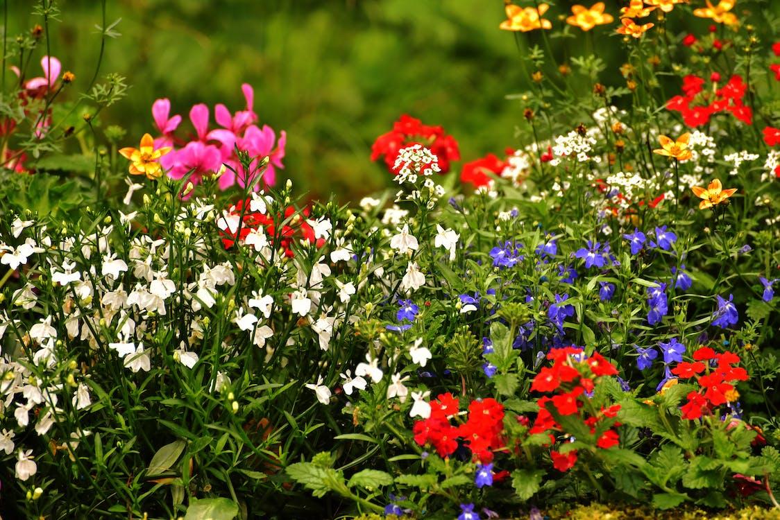 botanický, detailný záber, farebný