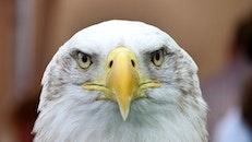 bird, animal, beak