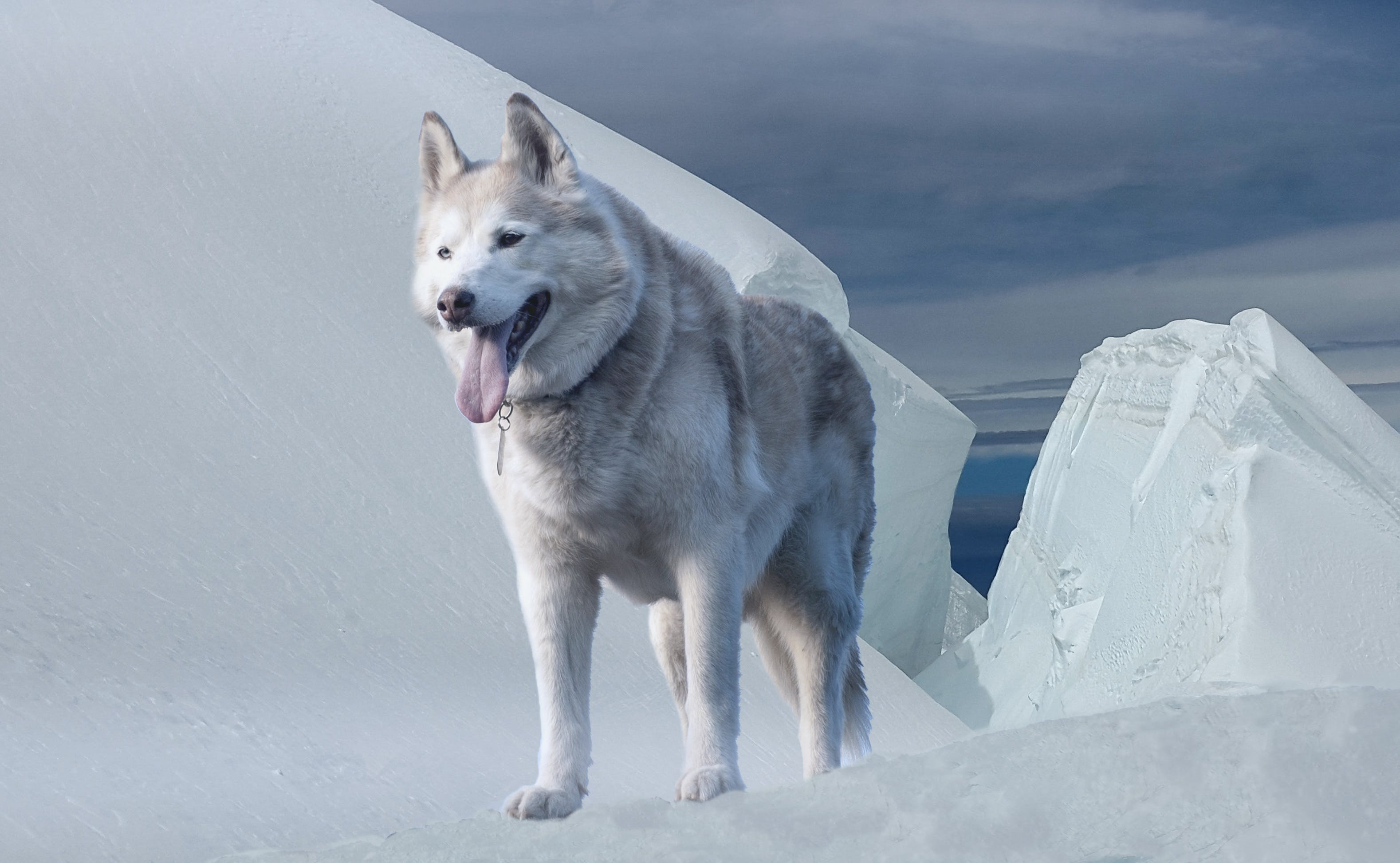 animal, canine, climate