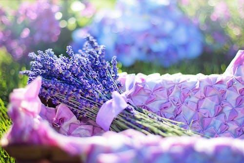 Фото фокуса лаванды на корзине