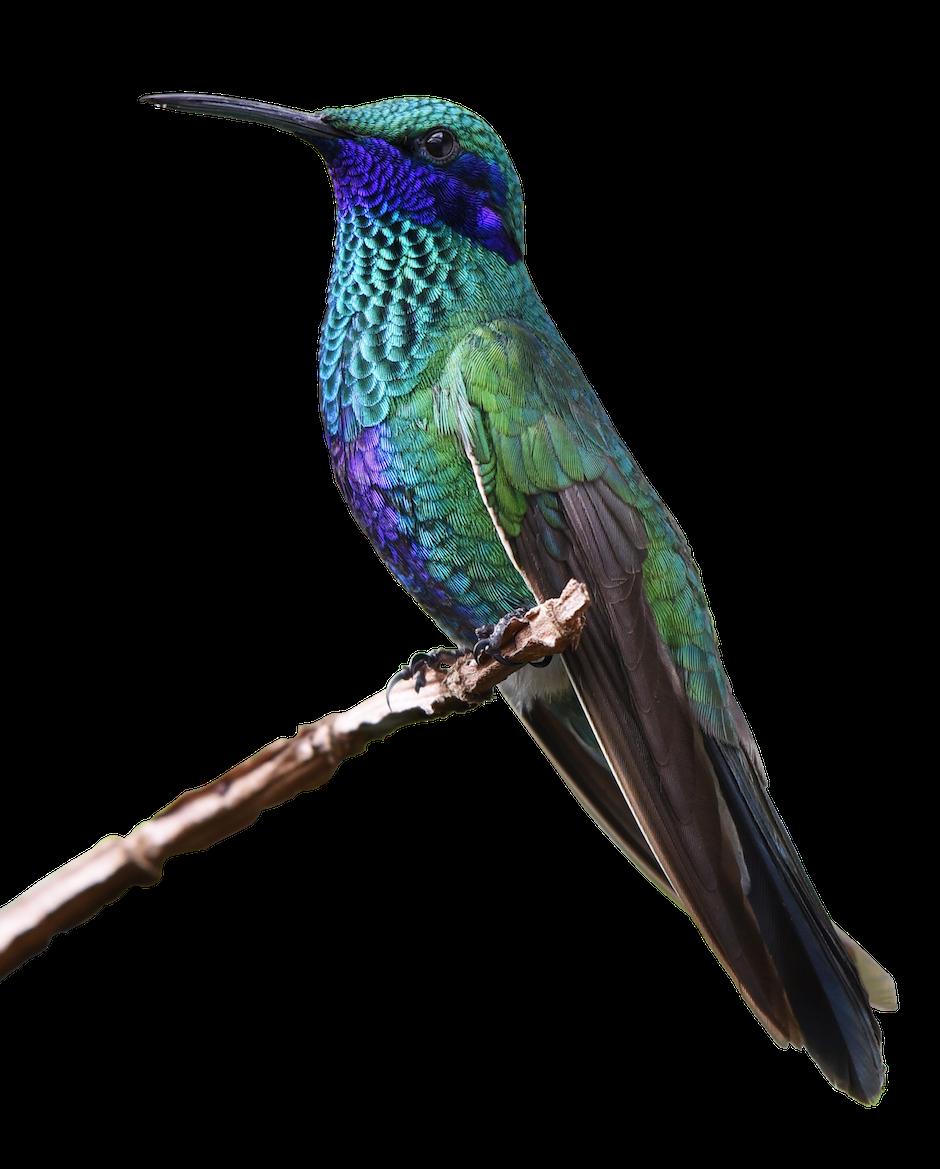 animal world, bill, bird