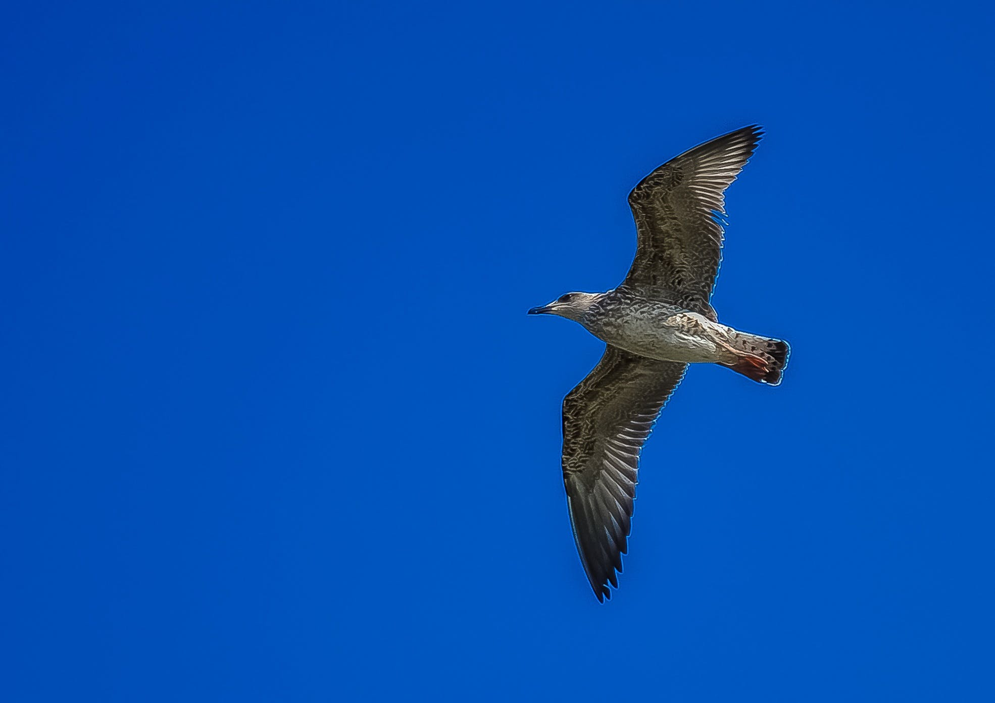 White and Grey Bird Flying during Day Time