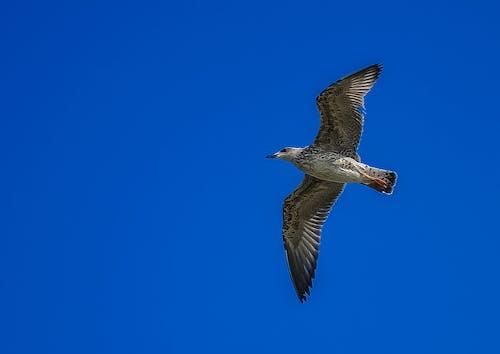 Imagine de stoc gratuită din animal, cer, în zbor, natură