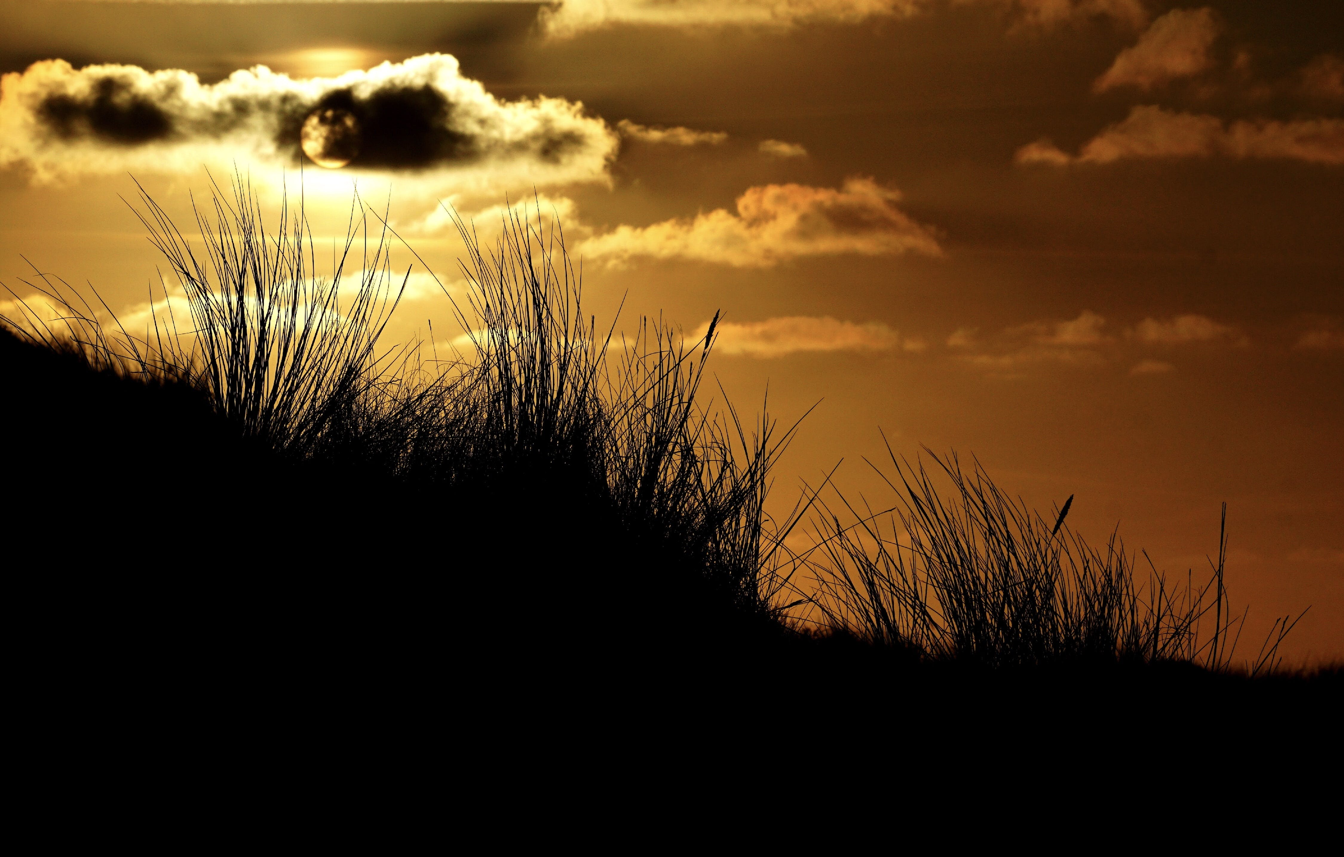 Silhouette of Grass and Skies