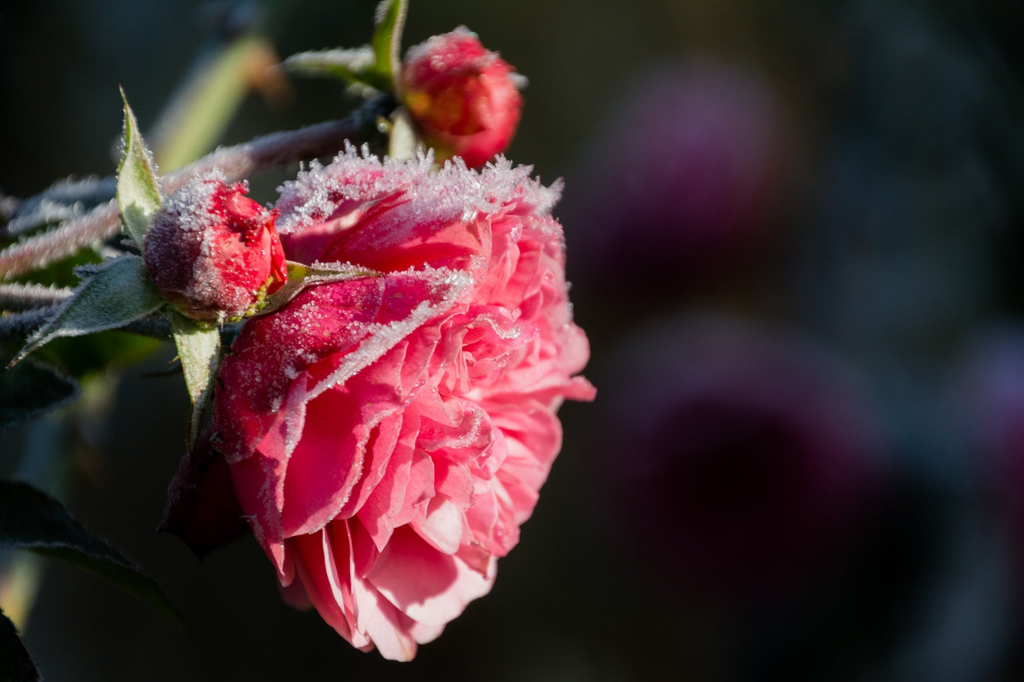 Red Flower on Macro Shot
