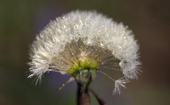 Free stock photo of nature, plant, dew, wet