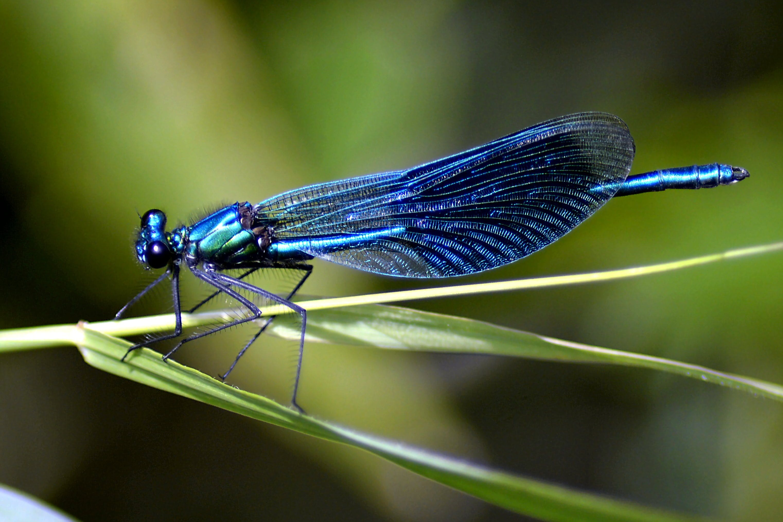 antenna, biology, blue