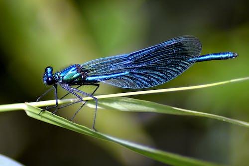 Photos gratuites de ailes, biologie, bleu, brouiller