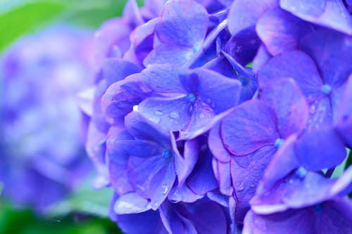 Darmowe zdjęcie z galerii z botaniczny, delikatny, deszcz, fioletowy
