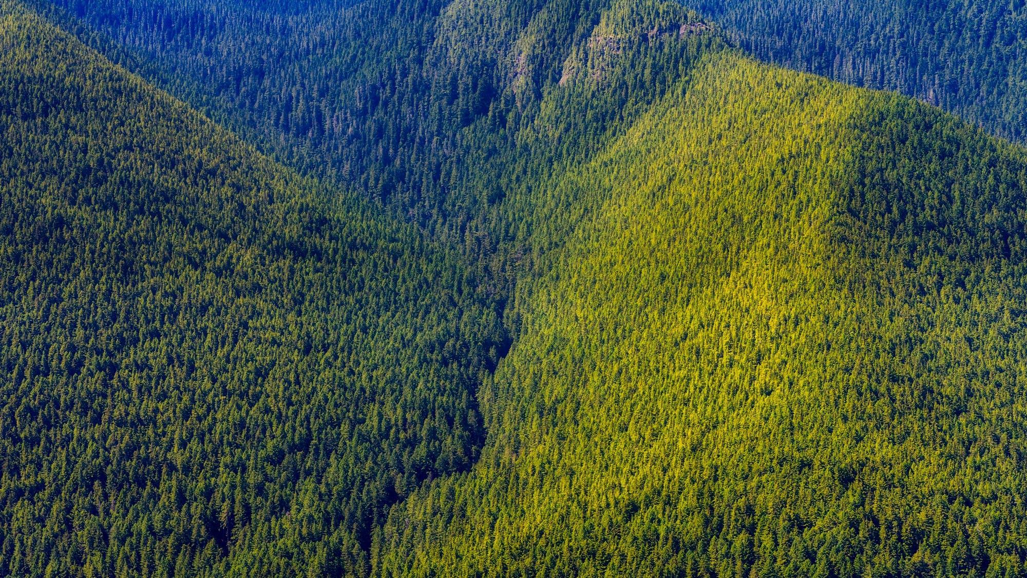 Photos gratuites de arbres, colline, d'en haut, environnement