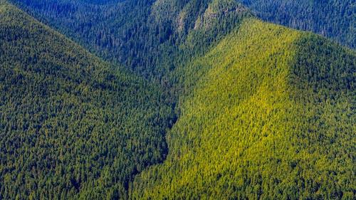 Бесплатное стоковое фото с гора, деревья, дневной свет, долина