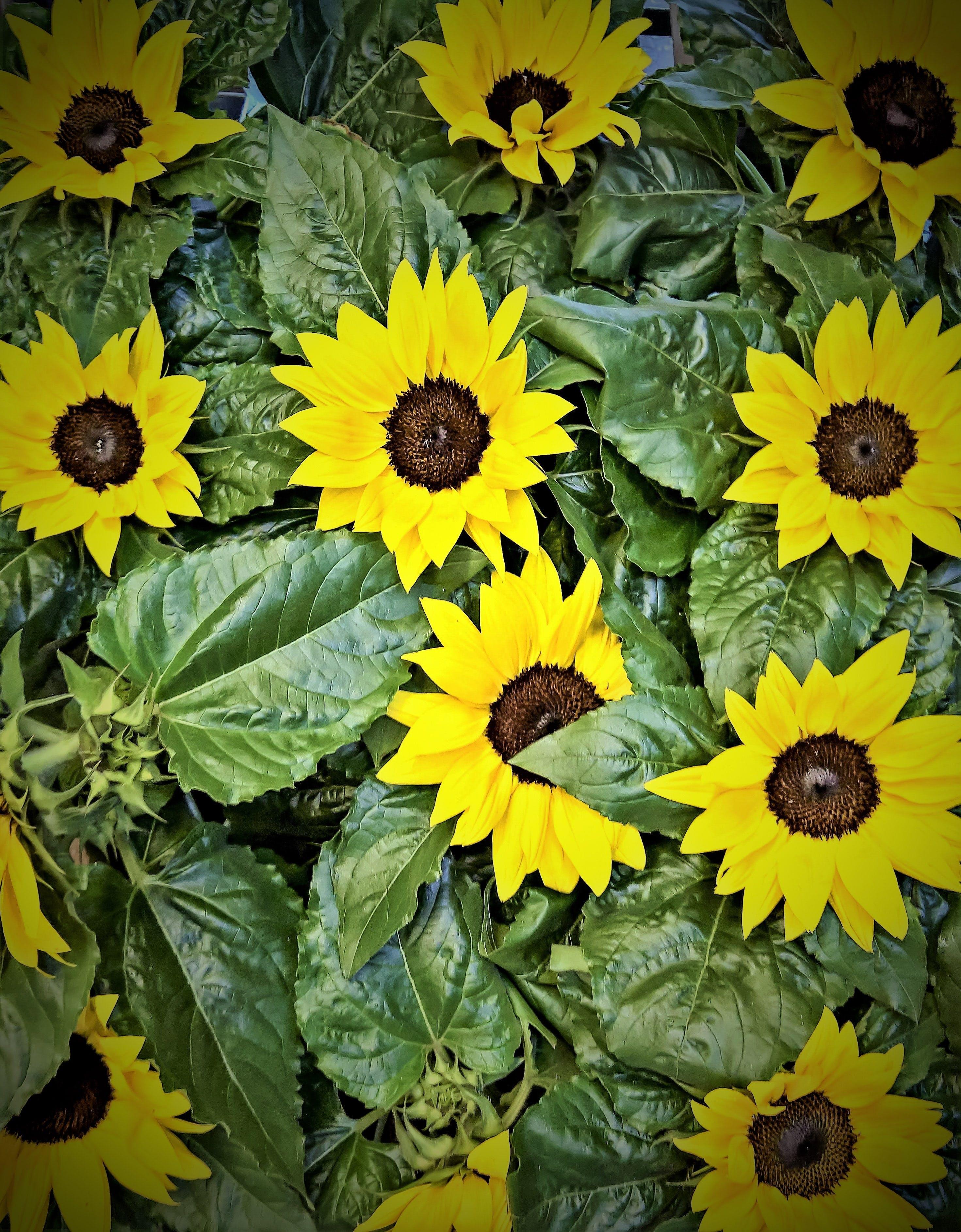 Free stock photo of summer, plant, market, bright