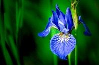 natur, blau, gras