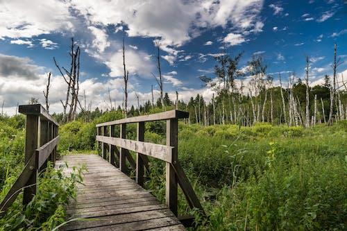 Foto stok gratis alam, awan, bidang, gelanggang