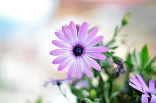 1000 beautiful spring flowers photos pexels free stock photos free stock photo of sunny flowers sun purple mightylinksfo