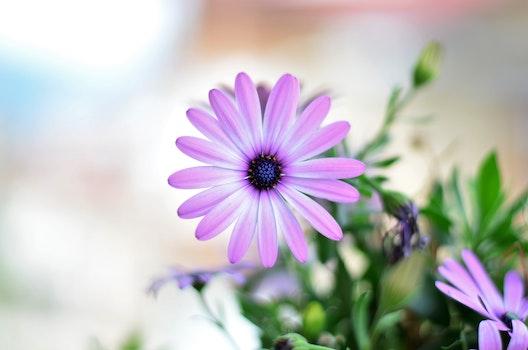 Free stock photo of sunny, flowers, sun, purple