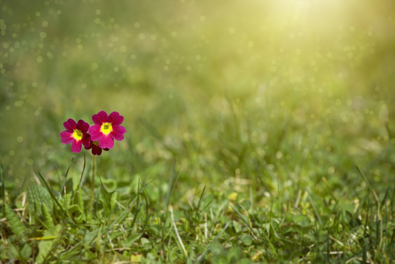 꽃, 꽃이 피는, 꽃잎, 들판의 무료 스톡 사진
