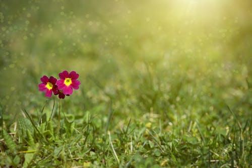 增長, 天性, 工厂, 植物群 的 免费素材照片