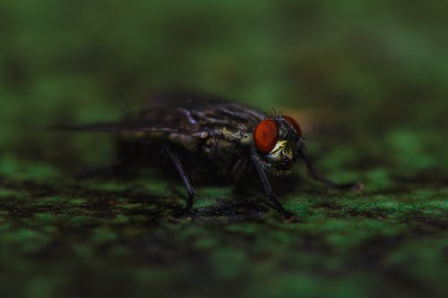 Ilmainen kuvapankkikuva tunnisteilla aavemainen, eläin, hyönteinen