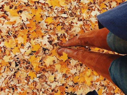 Бесплатное стоковое фото с абстрактный, апельсин, День благодарения
