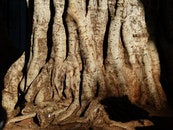 trunk, tree, roots