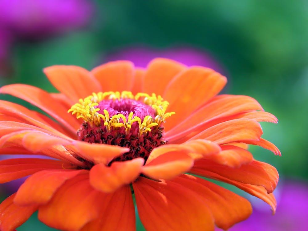 appelsin, blomst, flora